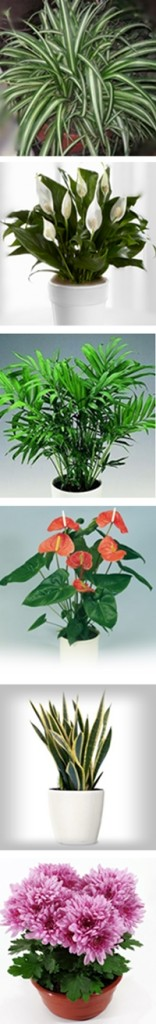 Detoxify your air with houseplants