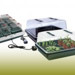 Growing seeds in a propagator