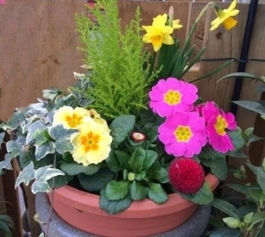 Mothers day planters