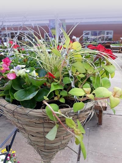 Hanging baskets - Henry Street
