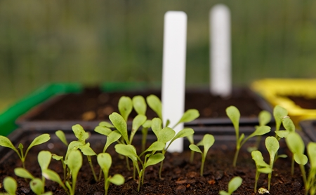 Propagating seeds