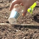 direct sowing vegetable seeds